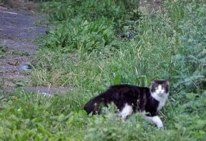 Greg Saulmon Cat Photo 3
