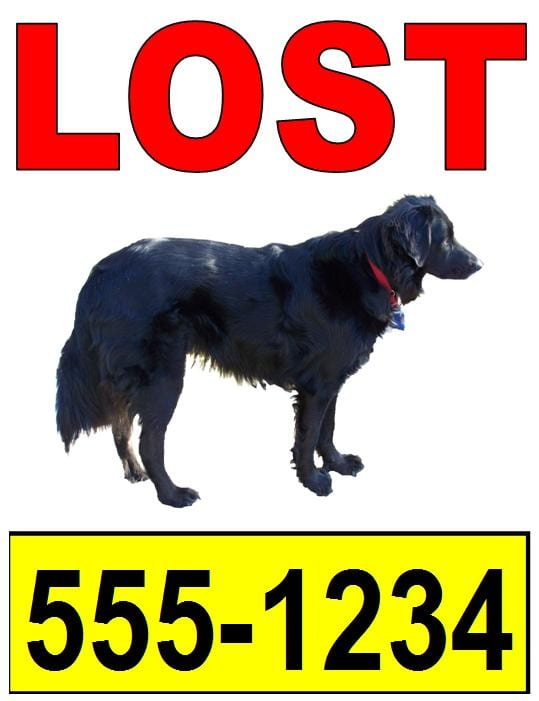 Example Poster Lost Pet Research Recovery – Pet Poster