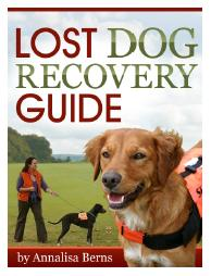 Lost dog recovery guide