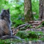 Cat Sitting in Woods - Morgue File