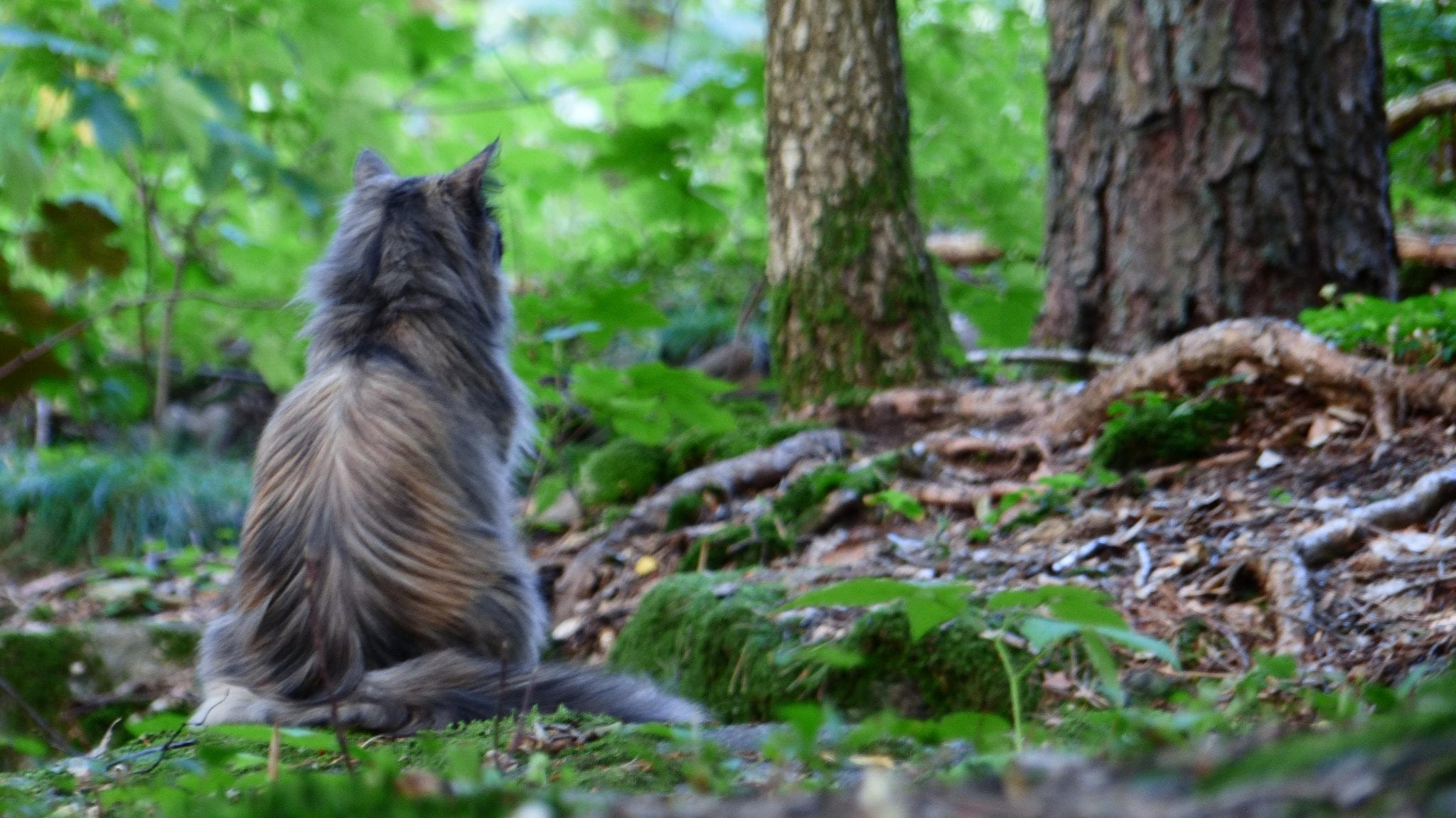 Pros And Cons Of Cats gps versus radio-tracking: pros and cons for finding cats - lost