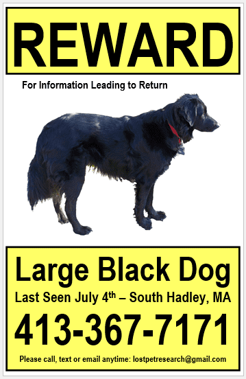 Large Lost Dog Poster - Lost Pet Research & Recovery