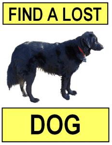 Find a Lost Dog Button 2