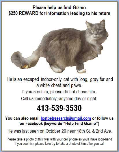 Letter-style lost cat flyer