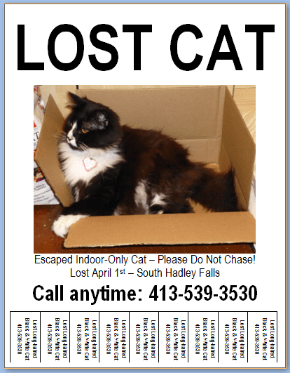 Lost Cat Flyer with Tear-off Tabs