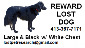 Example of a lost dog business card