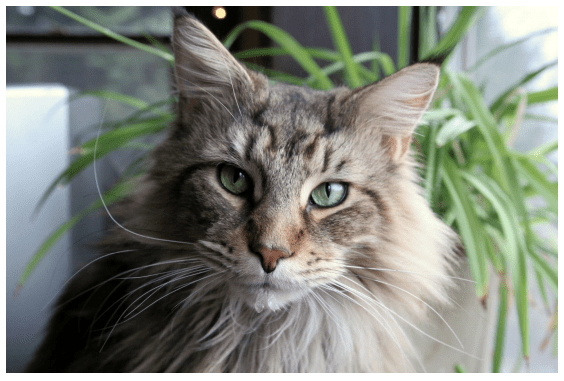 Rescue Shelters For Cats Near Greenfield Ma