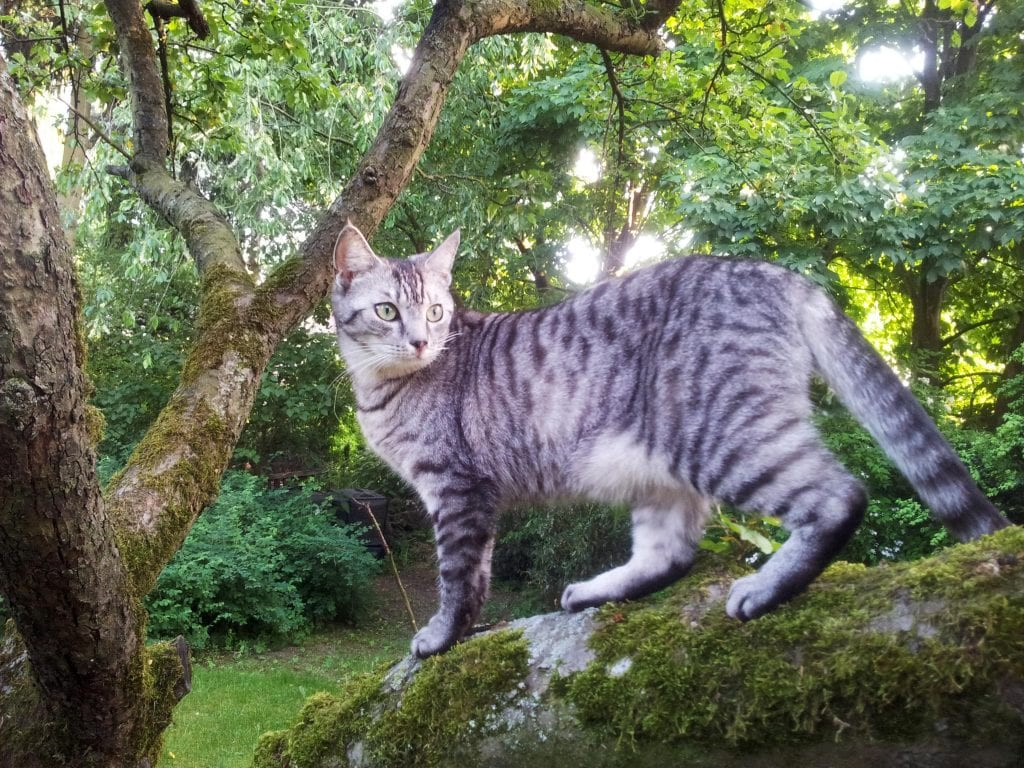 find a lost outdoor-access cat