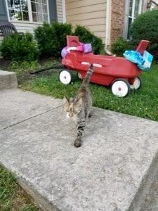Photo of lost cat Mia where she was found