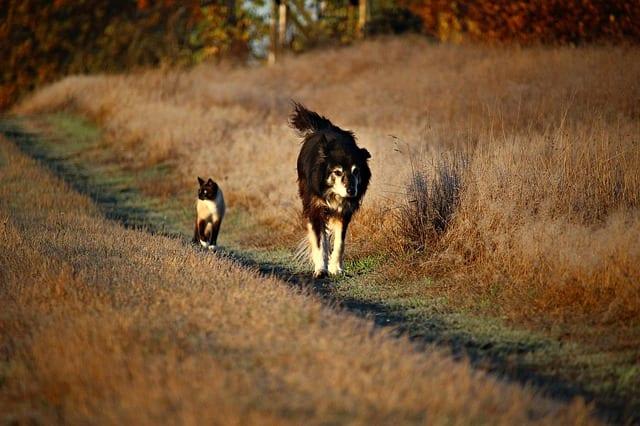 stray cat and stray dog