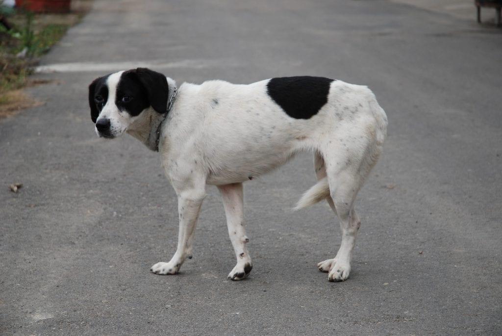 Fearful lost dog