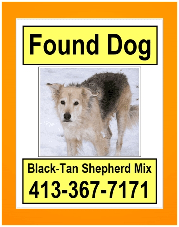 Lost Dog Tracking Services