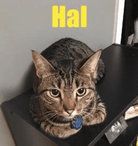 Lost Cat Hal Found