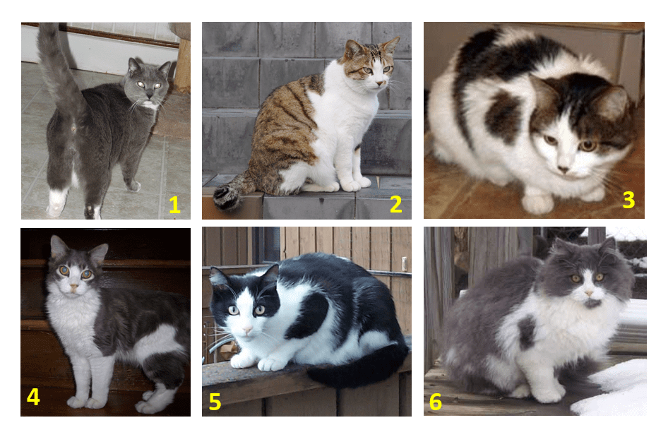 Example Photo Line Up for Lost Cat