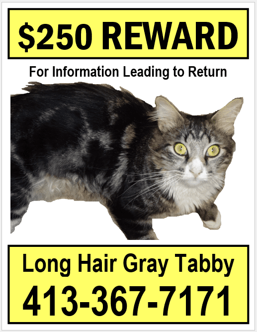 Small Lost Cat Poster