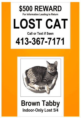 X Large Lost Cat Poster