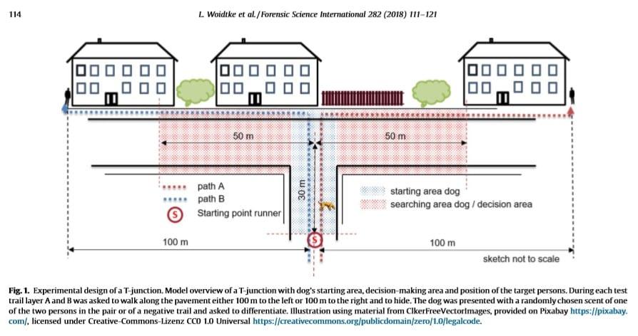 Fig 1 from Woidtke et al 2018 Mantrailing experimental design