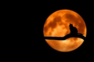 Cat sitting in front of moon Halloween