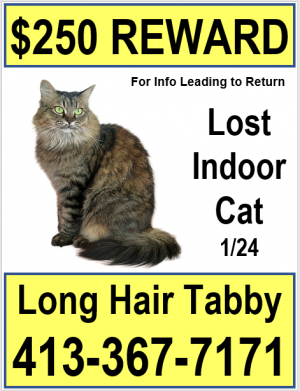 small lost cat poster with reward
