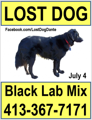 Small lost dog poster