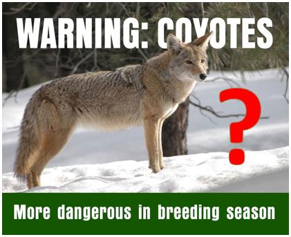 Coyote mating meme?