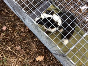 Lost dog Ceacey trapped
