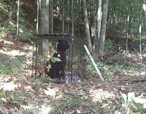Lost Dog Darth Trapped